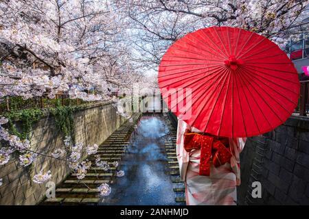 Asian young woman wearing kimono traditionnel japonais voyageur avec parapluie rouge Visites à destination célèbre cherry blossom canal bordé de Meguro Banque D'Images