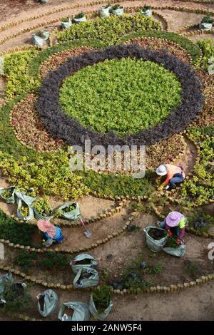 Les femmes travaillent à la plantation d'un jardin au passage piéton dans le parc Quarry Bay à Hong Kong.