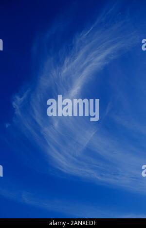 Cirrus blanc brillant à la lumière du ciel bleu, cadre vertical.