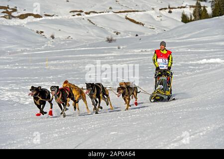 Équipe de traîneau à chiens à la Grande Odyssée Savoie Mont Blanc, Praz de Lys Sommand, Haute-Savoie, France Banque D'Images