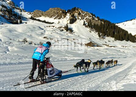 Musher et son équipe de chiens de traîneau sur le plateau de Sommand, course de traîneaux à chiens La Grande Odyssee Savoie Mont Blanc, Praz de Lys Sommand, Haute-Savoie, France Banque D'Images