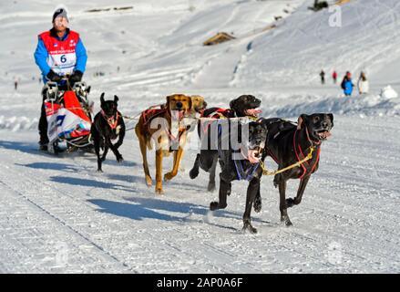 Le traîneau à chiens, traîneau à chien race La Grande Odyssee Savoie Mont Blanc, Praz de Lys Sommand, Haute-Savoie, France Banque D'Images