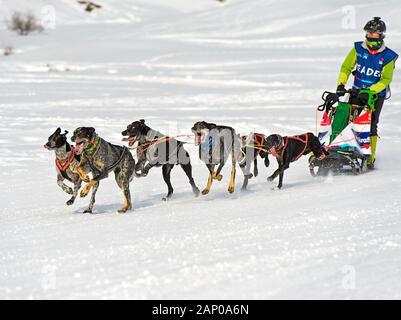 L'équipe de chien de traîneau de chien de chasse de croisements, traîneau à chiens, traîneau à chien race La Grande Odyssee Savoie Mont Blanc, Praz de Lys Sommand, Haute-Savoie, France Banque D'Images