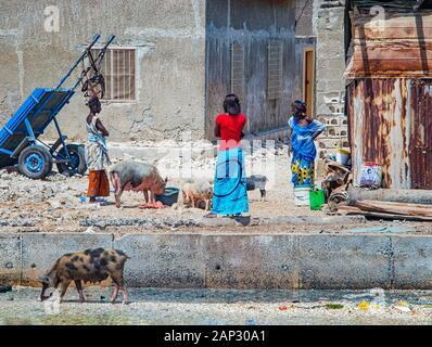 Fadiouth, le Sénégal, l'Afrique - 26 Avril 2019: femme sénégalaise non identifiés en robe colorée rss un groupe de porcs domestiques en face de vieilles maisons à Banque D'Images