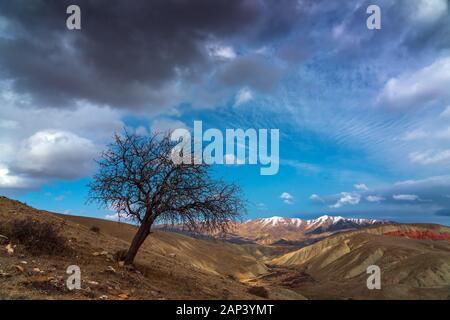 Les arbres nus sur un flanc de montagne Banque D'Images