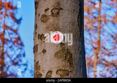 Point rouge sur un tronc d'arbre pour marquer le cours d'un sentier de randonnée, marquage typiquement allemand pour que les randonneurs trouvent le bon chemin Banque D'Images