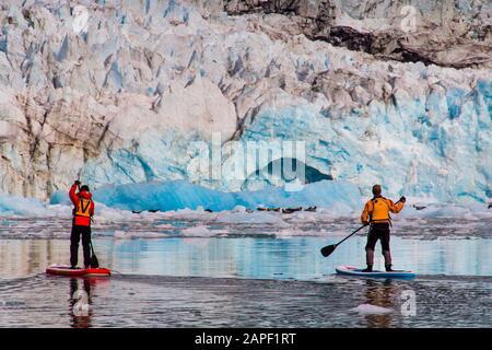Deux paddleboarders paddle jusqu'au glacier McBride et un groupe de phoques du port. Banque D'Images