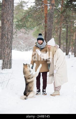 Heureux jeune couple en hiver jouant avec husky siberien à la purée Banque D'Images