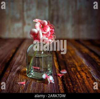 Toujours la vie avec des fleurs de géraniums. Gros plan sur un fond doux et flou. Vintage.