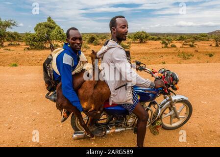 Des hommes en moto qui prennent des chèvres qu'ils ont achetés sur le marché hebdomadaire de la tribu Hamer à Turmi, Omo Valley, Ethiopie. Banque D'Images