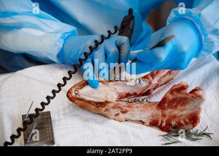 Le processus de formation en médecine dentaire. Mâchoire de porc comme outil d'apprentissage en chirurgie apicale. Banque D'Images