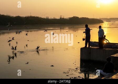 New Delhi, Inde - 04 mars 2018 : homme alimentant les goélands de Sibérie à la rivière Yamuna. Les goélands de Sibérie sont des oiseaux migrateurs qui atteignent l'Inde chaque année pendant W Banque D'Images