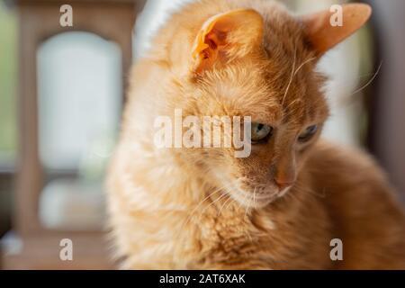 Adorable, doux, drôle et timide chat regardant les environs