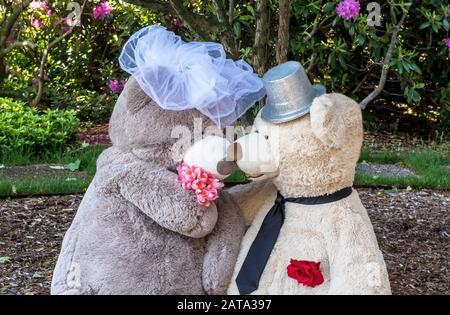 baiser de mariage ours en peluche lors d'un mariage extérieur ours Banque D'Images