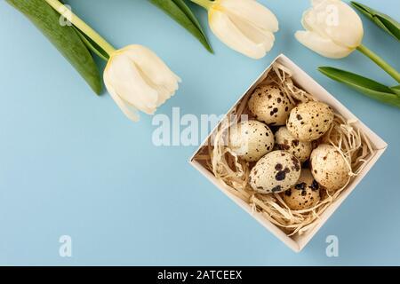 Pâques toujours la vie. Boîte avec œufs de caille et tulipes sur fond bleu. Espace de copie.