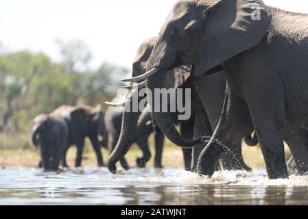 Troupeau d'éléphants dans la nature sauvage de l'Afrique Banque D'Images