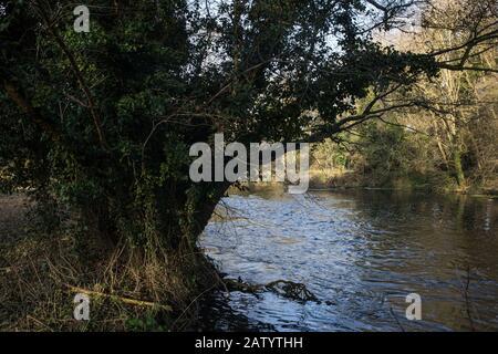 Denham, Royaume-Uni. 5 Février 2020. La rivière Colne à Denham Ford dans Denham Country Park. Les travaux prévus en conjonction avec la liaison ferroviaire à grande vitesse de la   devraient inclure un pont Bailey traversant juste au-delà de l'ancien arbre d'aulne sur la gauche et un composé dans la forêt ancienne à droite qui fait partie d'une réserve naturelle. Les militants de l'environnement occupent des arbres à proximité pour tenter d'empêcher le travail. Crédit: Mark Kerrison/Alay Live News