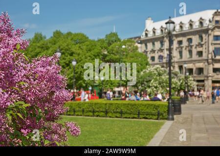 Fleurs fleuries et personnes profitant de la journée d'été ensoleillée au parc d'Oslo, Norvège.