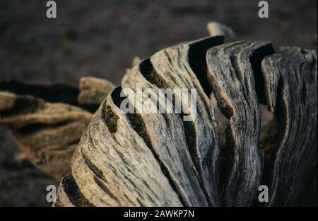 Gros plan du tronc d'arbre rugueux dégrodé