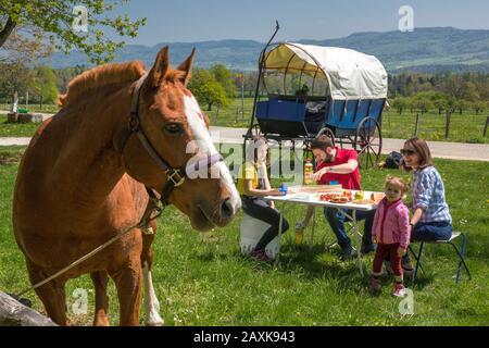 Ferien mit Pferdewagen im Jura Banque D'Images
