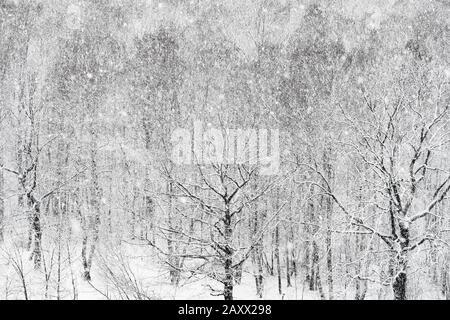 vue sur la tempête de neige au-dessus de la forêt en hiver Banque D'Images