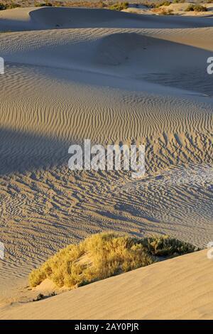 Dunes De Mesquite Flat, Au Lever Du Soleil, Parc National De La Vallée De La Mort