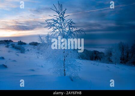 Buissons et petits arbres couverts de givre, de neige, de paysage d'hiver, de jour ensoleillé
