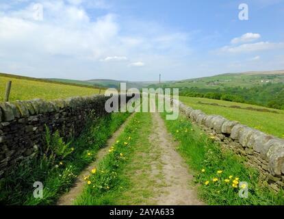 longue allée de campagne droite avec des murs en pierre sèche entourés de pâturages verts avec des fleurs sauvages à beau