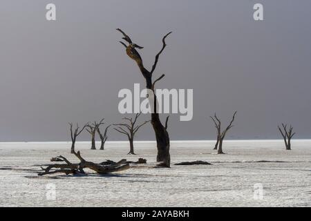 Le paysage sec de Deadvlei, une poêle en argile caractérisée par des arbres d'argousier de chameau sombre et mort contraste avec le fond de la poêle blanche, situé à Sossusvlei Banque D'Images