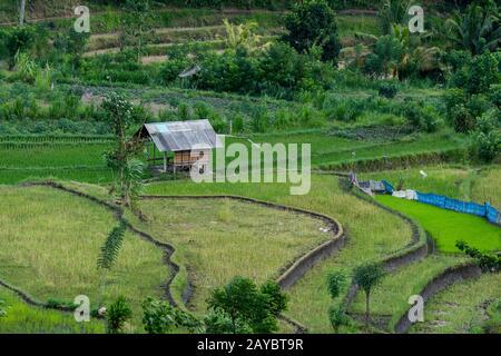Vue sur les rizières en terrasse près de Tirtagangga, Bali, Indonésie. Banque D'Images