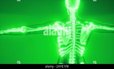 Corps Humain transparent avec les os visibles Banque D'Images