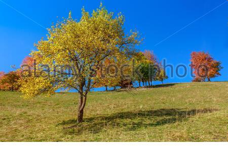 Arbres d'automne en Transylvanie Banque D'Images