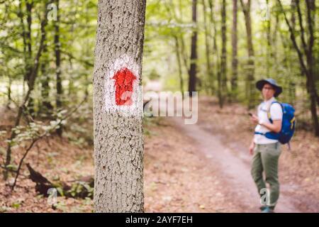 Randonnée marquée sentier dans la forêt. Marquage de l'itinéraire touristique peint sur l'arbre. Panneau d'itinéraire touristique. Panneau d'itinéraire de voyage. Touri Banque D'Images