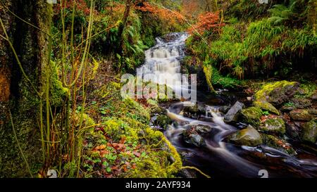 Cascade Trail au Glenariff Forest Park, County Antrim. Randonnée en Irlande du Nord Banque D'Images