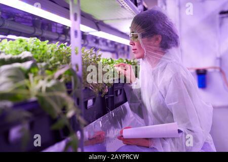 Vue latérale portrait d'un ingénieur agricole féminin examinant les plantes en pépinière serres éclairées par la lumière bleue, espace de copie