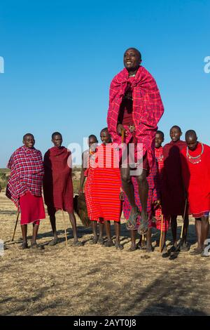 Les jeunes hommes Maasai qui ont une danse traditionnelle de saut dans le Masai Mara au Kenya. Banque D'Images