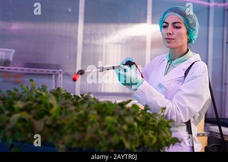 Portrait de la travailleuse en pulvérisation d'engrais sur des plantes vertes en laboratoire biologique ou en serre de pépinière, espace de copie