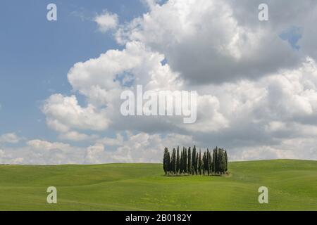 Cercle de cyprès près de Torrenieri au coeur de la Toscane, Italie. Banque D'Images