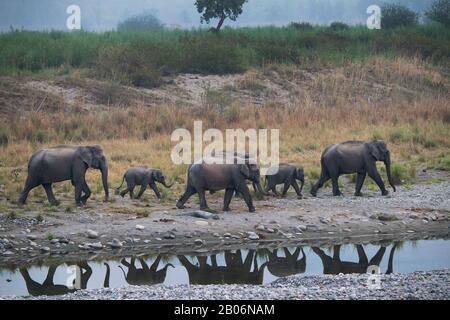 L'image de l'éléphant d'Asie (Elephas maximus) avec réflexion dans le Parc National Corbett, Inde, Asie