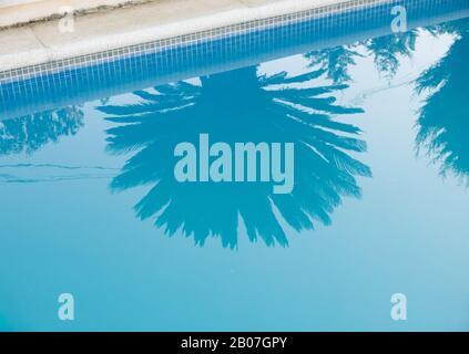 Refelectioon d'un palmier sur l'eau encore bleue d'une piscine d'une villa à Sant Josep de sa Talaia, sur l'île d'Ibiza, Iles Baléares Banque D'Images