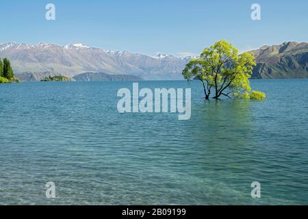 Vue sur le célèbre arbre de Wanaka, dans le lac Wanaka, île du Sud, Nouvelle-Zélande 29 novembre 2019 Banque D'Images