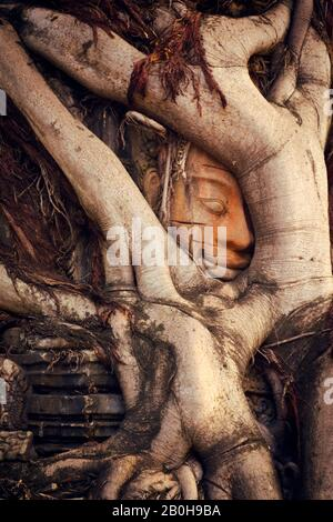 Ancienne sculpture en pierre khmère piégée sous des racines cultivées dans un temple de Siem Reap, au Cambodge.