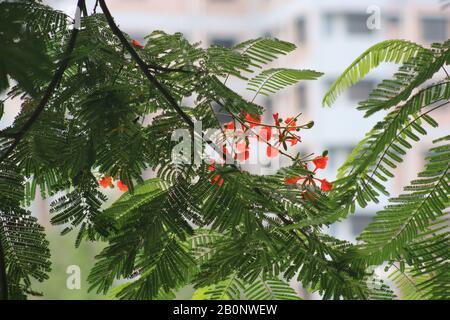fleurs rouges Banque D'Images