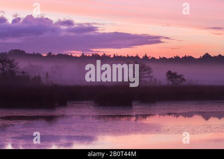 Kalmthoutse Heide en début de matinée, Belgique