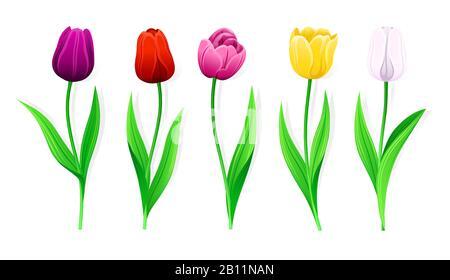 Collection De Tulipes Vector Roses, Jaunes, Rouges, Blanches, Violettes Avec Feuilles Souches Et Vertes. Jeu De Fleurs De Printemps Isolées Avec Pétales Multicolores. Dif Banque D'Images