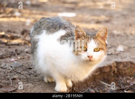 Joli chat jeune regardant l'appareil photo. Chat charmant