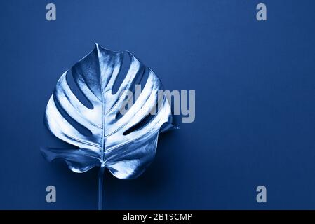 Tendance d'été exotique dans un style minimaliste. Feuilles de palmiers tropicaux monstera sur fond de couleur bleue classique. Et l'étincelle brillant concept design, mode Banque D'Images