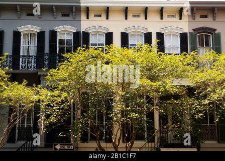 FRONT STREET: Maisons de ville résidentielles dans le centre historique Savannah, Géorgie sont cachés dans l'obscurité par de petits arbres bordant la rue. Banque D'Images