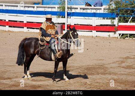 Cheval de cowboy chilien; Huaso; port de vêtements traditionnels, chupella, poncho, chamanto, espuelas, spurs, estribos, étriers en bois, bottes noires, d