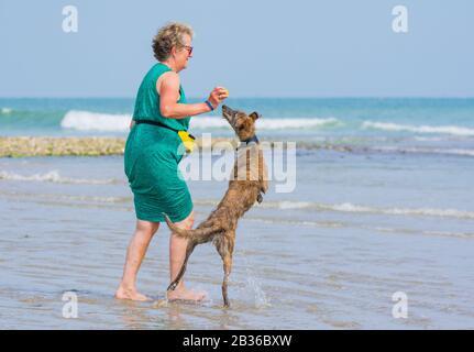 Femme jouant avec un Scottish Deerhound Lurcher chien sur une plage sur une journée chaude en été au Royaume-Uni. Banque D'Images